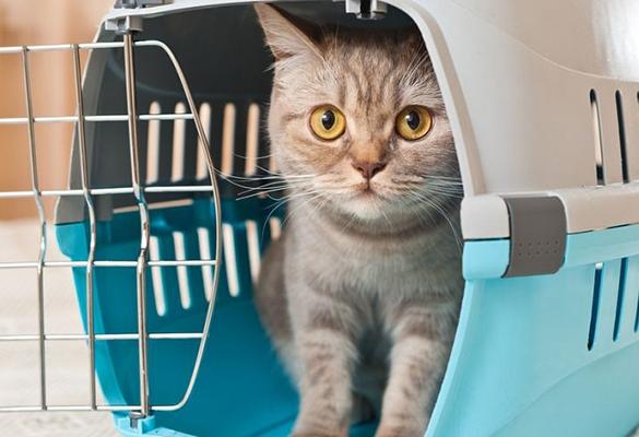Перевозка животных в багажном отсеке